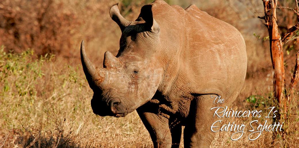 Rhino eating spaghetti